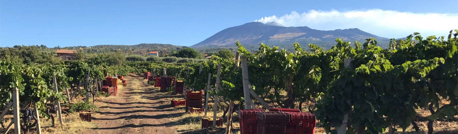 Gaja introduceert eerste Etna-wijn!