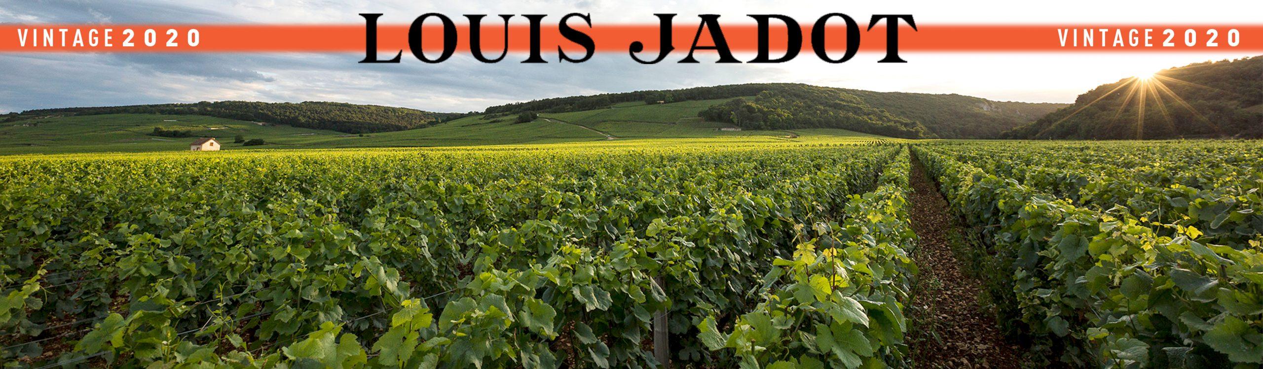 Louis Jadot 2020: Alle ingrediënten voor een onvergetelijke vintage!
